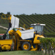 Mechanical harvesting of grapes in the vineyard — Stock Photo #32736403