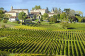 Vineyards of Saint Emilion, Bordeaux Vineyards — Stock Photo
