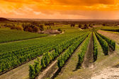 Vineyard Sunrise-Vineyards of Saint Emilion, Bordeaux Vineyards — 图库照片