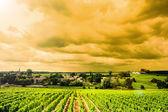 Vingården sunrise — Stockfoto