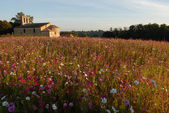 French campaign-Church of Cardan and flowery fallow at sunset — Stock Photo