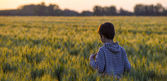 Little boy through a wheat field at sunset — 图库照片