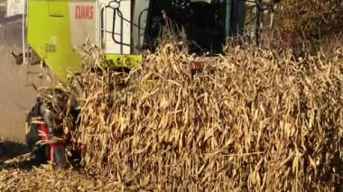 Food factory, Food, Cereal Mill Seed-Corn — Stock Video