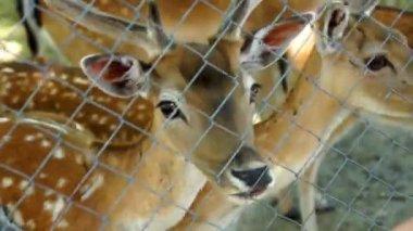 美丽的鹿 — 图库视频影像