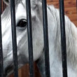 White horse head close up — Stock Video