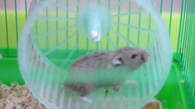 Hamster on wheel in a cage — Stock Video