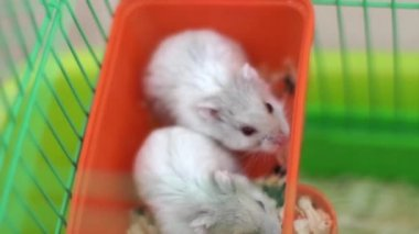 Hamsters in a cage — Stock Video