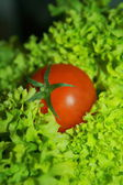 番茄蔬菜和生菜沙拉 — 图库照片