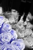 Roses and fountain pen — Stock Photo
