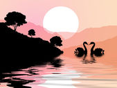 Swans on the beach at sunset — Stock Photo