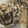 Stock Photo: Angry tiger in the blizzard