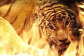 Angry tiger near fire — Stock Photo