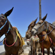 Stock Photo: Three donkeys
