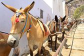 The donkeys — Stock Photo