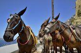 Three donkeys — Stock Photo