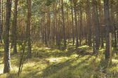 Fence in forest — Stockfoto