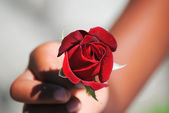 Red rose in hand — Stock Photo