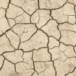 Dried earth — Stock Photo