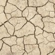 Stockfoto: Dried earth