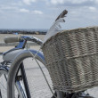 Granny bicycle — Stock Photo #29835561