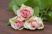 Three pink roses  — Stock Photo
