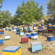 Beekeeping on Crete. — Stock Photo