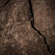 Stock Photo: Crack in the Wood