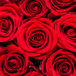 Red Roses — Stock Photo #25245893
