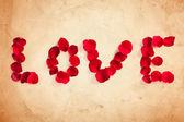 Miłość płatek róży — Zdjęcie stockowe