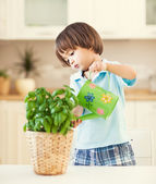 Watering the Plant — Stock Photo