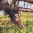 Horse Eating Grass — Stock Photo