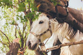 Caballo blanco y marrón — Foto de Stock