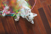 Kitten Playing With Colourful Threads — Stock Photo
