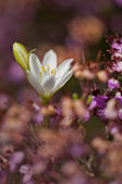 Wildflowers — Zdjęcie stockowe