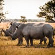 Two Rhinos — Stock Photo