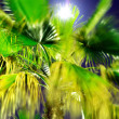 Palm tree against light — Stock Photo #30048975