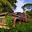Truck-wreck in the jungle — Stock Photo
