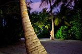 Palm Tree View at night Maldives — Stok fotoğraf
