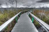 Vägen till skogen — Stockfoto