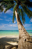 Palm tree on the sand beach — Stok fotoğraf