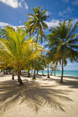 Palm trees on the sand beach — Stok fotoğraf