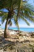 Palm beach on Tulum Mexico — Stock Photo