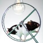 Hamster on the wheel — Stock Photo #30052515