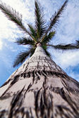 Palm crown — Stockfoto