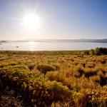 Mono Lake — Stock Photo #30899961