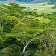 Rain forest Mauritius — Stock Photo