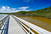 Boardwalk through the everglades — Stock Photo