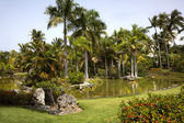 Palm Tree Pond — Stock Photo