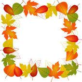 Autumn vector leaf border — Stock Vector
