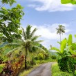 Stock Photo: Path in Tahiti